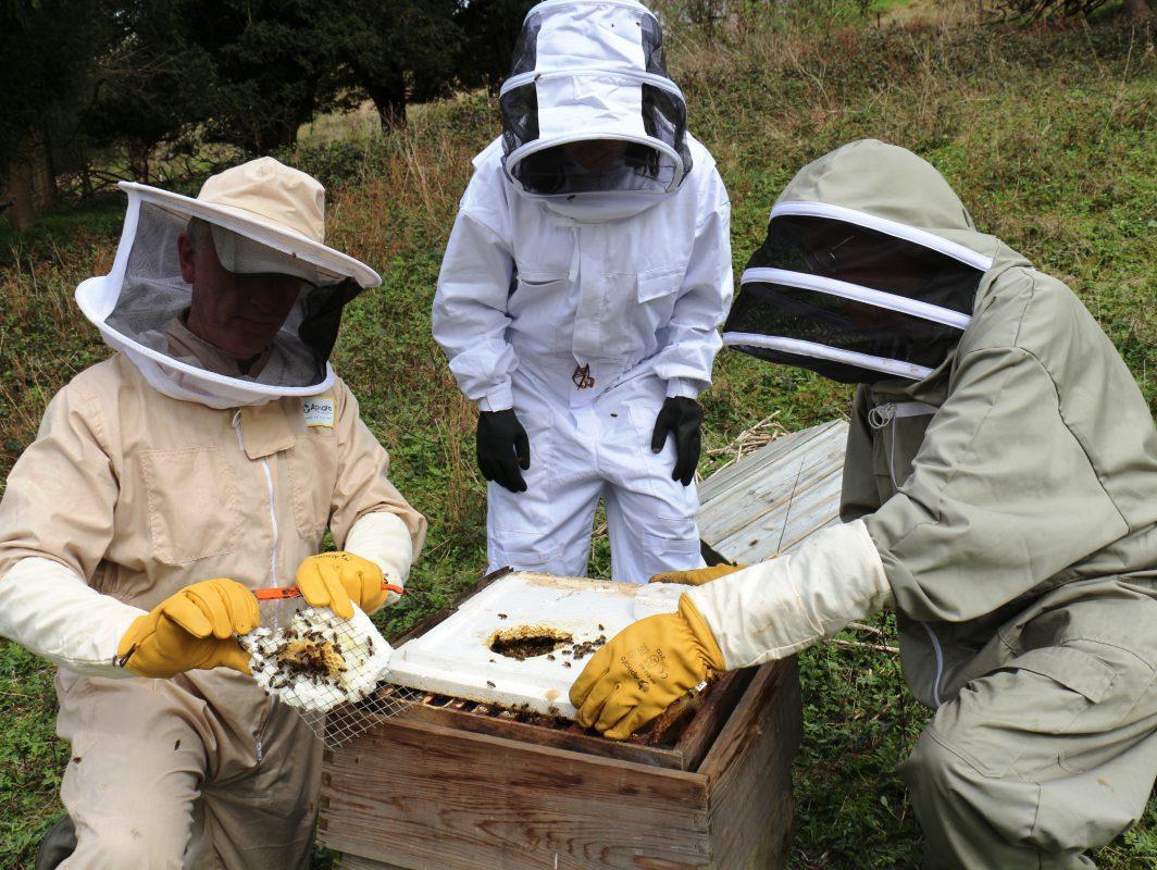 queen beehive