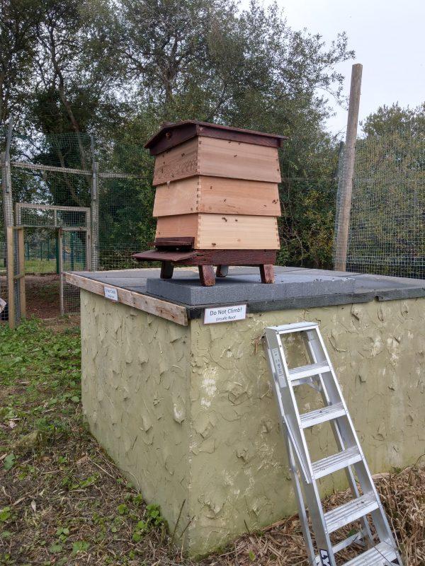 Beehive outside