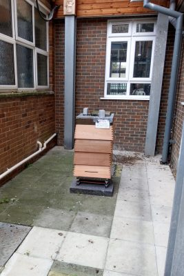 How to site a hive safely