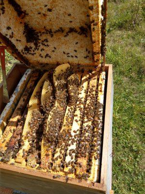 Wild Honey Comb
